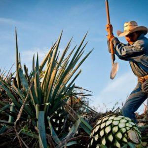 recorrido-tequila-825x510